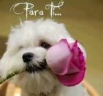 Para ti mi amor