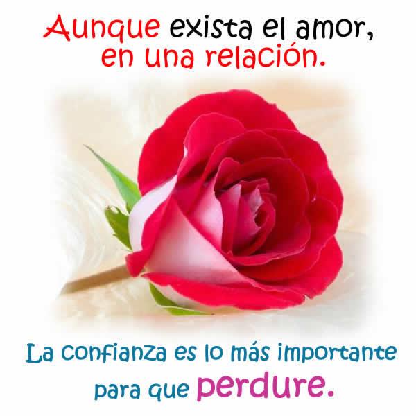 La rosa del amor