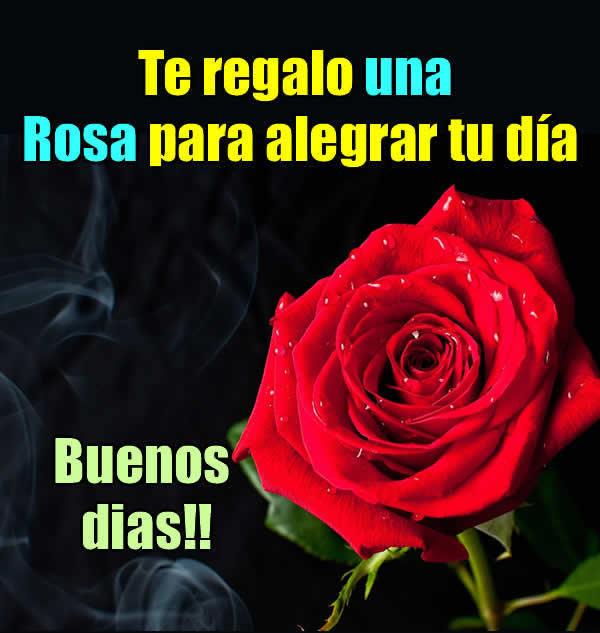 La rosa mas bonita del mundo