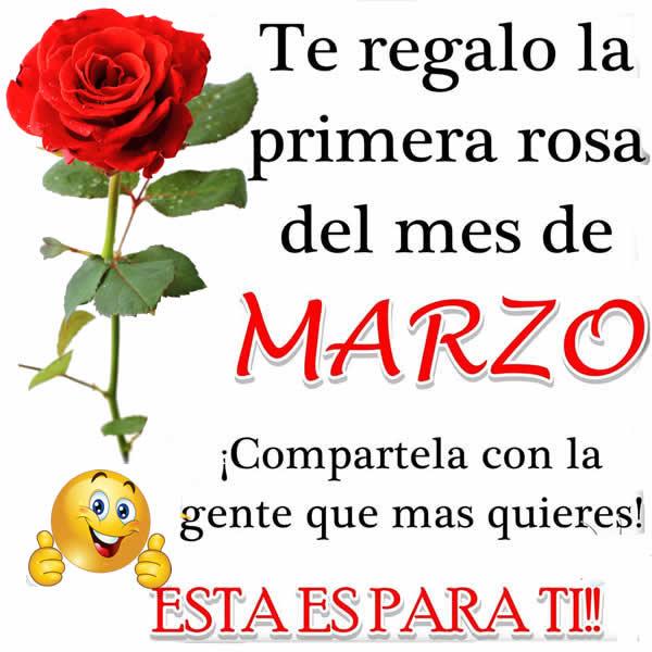 Rosas para regalar marzo