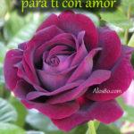 Frases bonitas con rosas lindas