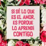 Frases de amor: Conoces el amor Letra