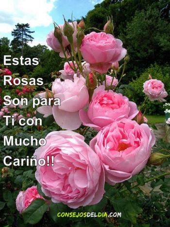 noche rosas