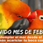 Frases con Fotos del mes de Febrero