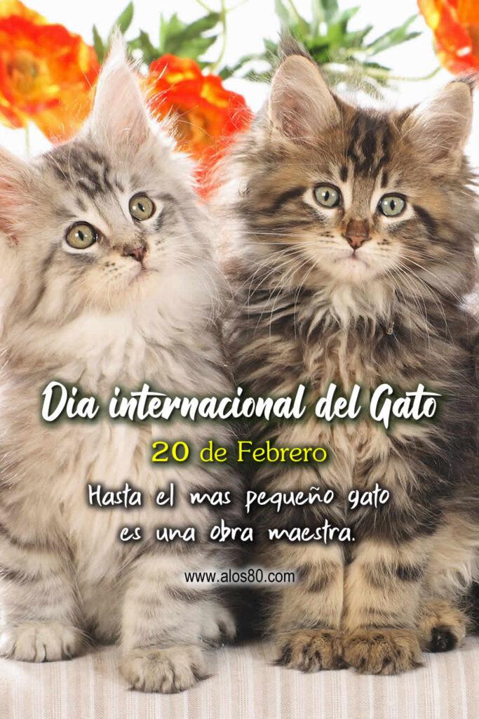 dia internacional del gato